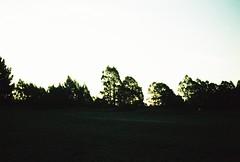 E101183-R1-30-31 (Savviesmith) Tags: camera new winter christchurch sky sunlight film skyline 35mm lomo lomography saturated silhouettes blurred olympus zealand glowing brightness