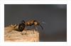 Hormiga (miguelangelortega) Tags: macro insect nikon sigma hormiga insecto 105mm ltytr1