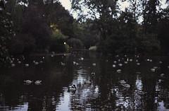 Stadtpark at night (rennes_i) Tags: vienna wien reflection tourism nature water night austria evening pond europe moody darkness walk magic ducks raining doves stadtpark irynayeroshko nikond610