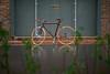 #bamboo #bamboobike #bike #bicycle #handmade #frame #newbody #o2bike #Bamboobike #Bambike #Bambusbike #Bamboobicycle #Bambusfahrrad #Bamboo #Bambus #sustainable #social #unique #nachhaltig #sozial #einzigartig #bicycle #velo #fahrrad #bicicleta #style #ve (ivannative) Tags: bike bicycle cycling russia handmade unique style bicicleta social bamboo ghana frame eco velo fahrrad sustainable kevlar bikeporn bambus spb sustainabledesign bamboobike bamboobicycle sozial велосипед newbody einzigartig nachhaltig velove bambike bambusfahrrad bambusbike o2bike бамбуковый instacying бамбубайк moskowbicycle