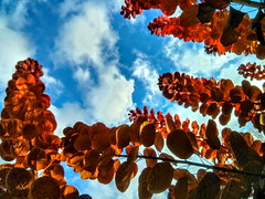 leaves and clouds (angelinas) Tags: outdoor autumn autumnlovers autumnleaves fallfoliage naturelovers nature natura light beautifulearth trees treelovers sky clouds ciel cielo youmademyday supershots foliage nuages