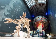 Stegosaurus @ the Natural History Museum (Hugo 808) Tags: london museum stegosaurus nhm
