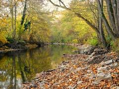 Die Rems im Herbst (almresi1) Tags: autumn trees water herbst ufer spiegelung ludwigsburg remseck rems flus
