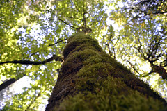 CLIMB  -  (Selected by GETTY IMAGES) (DESPITE STRAIGHT LINES) Tags: park wood canada tree nature beautiful beauty forest death waterfall still woods nikon rocks flickr day branch peace bc britishcolumbia decay branches salmon peaceful calm foliage vancouverisland waterfalls getty spawning naturalbeauty mothernature gettyimages existence d800 salmonrun demise beautifulbritishcolumbia paulwilliams nikkor1424mm nikon1424mm nikond800 despitestraightlines niagaracreektrestle goldstreamprovincialparkbc ontheroacksgoldstreamprovincialpark leaflifeexpectancy