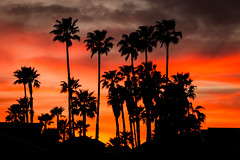 D04142E7 - Palm Tree Sunset Silhouette (Bob f1.4) Tags: trees sunset sky orange silhouette clouds rooftops gray palm
