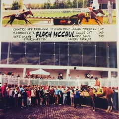 Flash McCaul Winner's Circle (friesanflyer) Tags: people horse love animal sport dedication racetrack happy boot groom bay official outdoor farm sunday group picture posing maryland naturallight racing professional dirt event riding pony breeding jockey winner horseracing win athlete excitement sporting laurel sire derby racecourse maiden thoroughbred equine mane owner eastcoast closer thoroughbreds pedigree ntra handicapping laurelpark jockeyclub winnerscircle gelding merryland apindy kathleenryan horseowner friesanfire cryptoclearance instagood horsesofinstagram americasbestracing kyderby2016 maidenscore mdbred flashmccaul broodmaresire