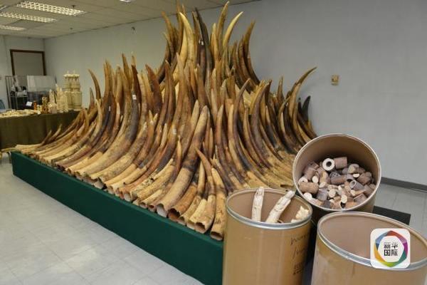 4名中国人走私犀牛角在坦桑尼亚被判20年监禁