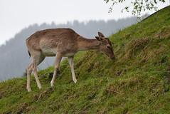 DSC_3866 (d90-fan) Tags: rauris raurisertal natur alpen salzburgerland österreich nationalpark npht hohe tauern wandern krumltal seidlwinkeltal