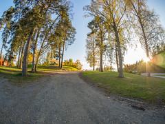 Road to Nowhere (MikeAncient) Tags: mntsl finland suomi syksy fall autumn foliage syksynlehdet puu puut tree trees sun aurinko auringonlasku sunset sunshine
