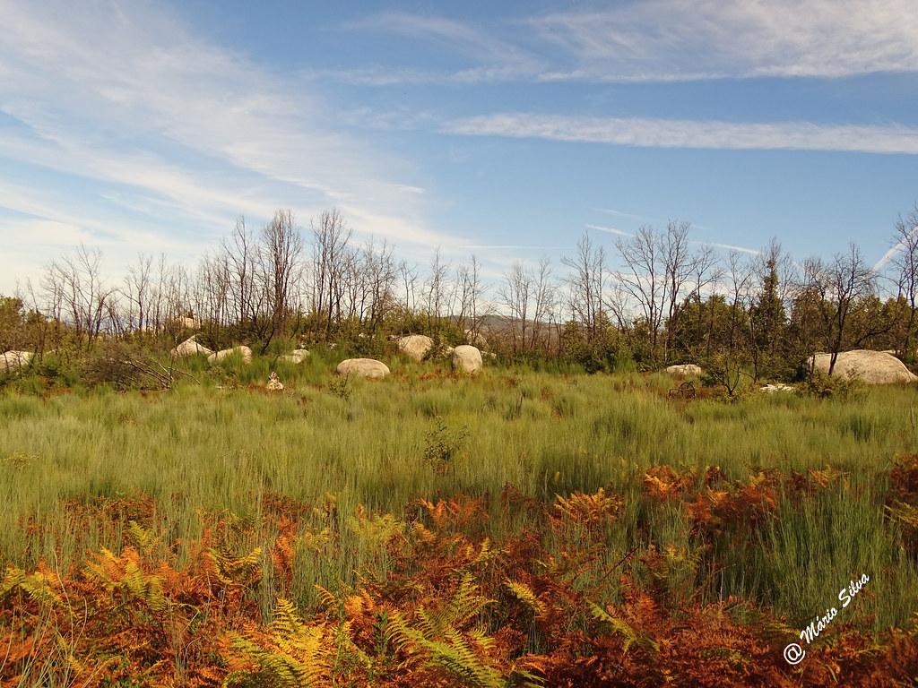 Águas Frias (Chaves) - ... paisagem cheirando a outono ... até os fetos secam ...