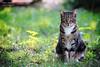 Tia (Elisa Medeot) Tags: cats gatti cute gattography belli carini animali animals natyre natura felini feline eyes occhi canon