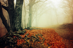 If These Trees Could Talk XXIX. (Zsolt Zsigmond) Tags: autumn fall roots trees forest woods fog mist landscape landschaft foliage leaves outdoors trail path colour picture day sigma exposure colours flickr red nature tree art light