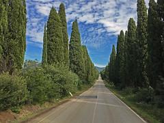 (autobusapedali) Tags: tree road squared iphonegrefia way italy tuscany vialedeicipressi bolgheri