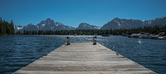 Marina - Colter Bay - Grand Teton National Park - Wyoming - 21 June 2016 (goatlockerguns) Tags: bison grandtetonnationalpark marina lake jackson mountains mountain trail trees forest nature natural teton grand wyoming usa unitedstatesofamerica west western