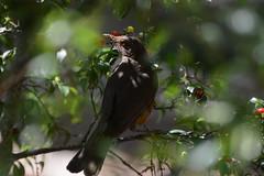 Bird Nature (Leandro Budzinski) Tags: d3200 nikon 70300 bird nature beautifull color green tree spring