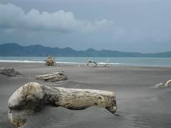 Wild beach (pimalesud) Tags: beach blue wild nature outside monochrome nuance sand wood sea new zealand grey