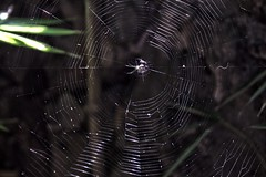 La talentosa araa (WhatsInMyEyes.FLR) Tags: spider araa nature animal travel viaje tepoztlan canon canoneos eos 1100d rebelt3 t3 rebel