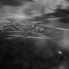 River Flow 025 (noahbw) Tags: d5000 desplainesriver nikon ryersonwoodsforestpreserve abstract blackwhite blackandwhite bw forest landscape minimal minimalism monochrome natural noahbw reeds ripples river spring square water woods