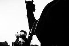 Smoke | Pushkar camel fair,Rajasthan. (vjisin) Tags: pushkar rajasthan india iamnikon nikond3200 asia camel street indianstreetphotography incredibleindia indianheritage travelphotography pushkarcamelfair herder monochrome blackandwhite inexplore outdoor sport animal travel 35mm nikon nikonofficial surreal smoke camelherder