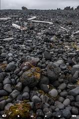 5056 A Playa de Dritvik (carlostorrebenito) Tags: algas cielo color figurativa gris nubes piedras troncosdearbol v seaweed sky colour figurative grey clouds stones treetrunks islandia 352