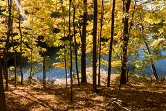 untitled (Homemade) Tags: sonydscrx100 autumn autumncolours fall fallcolors goldensbridge newyork muscootreservoir trees foliage leaves ny lewisboro westchestercounty