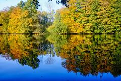Autumn colors @ Amsterdamse Bos (PaulHoo) Tags: fujifilm fuji x70 reflection sun water illuminated 2016 autumn fall mirror tree forest leaf amsterdamse bos