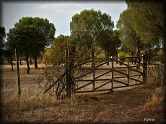 Ya lo tenemos aqu de nuevo, bienvenido Otoo!! (P e p a) Tags: otoo parquepolvoranca naturaleza campo vallas rboles