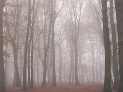 Autumn Mist (Teun Donders) Tags: leaves bladeren leave mist blad bruin brown herfst autumn fall fog trees tree boom bomen outdoor buiten bos forest forrest natuur nature dreamy dromerig spooky eng misterieus misterious hoog tall aarde earth nederland netherlands berg en dal nijmegen 2016 teun donders