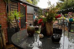 (Laszlo Papinot) Tags: famousflickrfive oceangrove clutter yard backyard wineyard oakdenewineyard wet rain garden