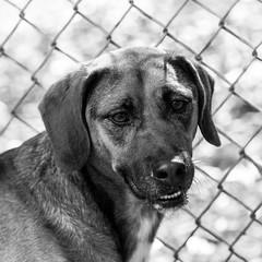 Howie03Dec1600097-Edit.jpg (fredstrobel) Tags: dogs pawsatanta phototype atlanta blackandwhite usa animals ga pets places pawsdogs decatur georgia unitedstates us