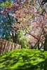 _MG_3658 (TobiasW.) Tags: spring frühling fruehling garden gardenflowers gartenblumen gärten garten blue mountains nsw australien australia backyard public