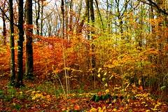 Nature (Cynthia.He) Tags: arbres nature feuillage plante forêt extérieur paysage