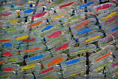 art (MiChaH) Tags: citytrip vakantie holiday porto city stad portugal 2016 september kunst art kunstwerk plastic vissen fishes colors kleuren aliados aliadossqaire aliadosplein artinwater kunstinwater plasticflesjesgevuldmetvissen plasticbottlesfilledwithfish