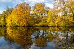 Autumn (Mahan Photography) Tags: autumn autumnleaves copenhagen landscape denmark colourfull