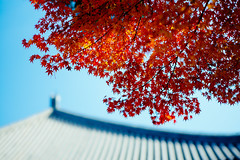 (sunnywinds*) Tags: nara momiji toshodaiji autumn winter foliage leaves red sky blue contrast architecture temple buddhist buddhism roof tree leica aposummicron m240 leicam