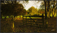 This Way. (Picture post.) Tags: landscape nature green gate trees sunlight autumn dappledlight fields paysage arbre interestingness shadows