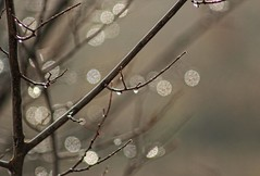 When trees cry (Vicky Bella) Tags: bokeh tree droplets branches branchs gouttesdeau