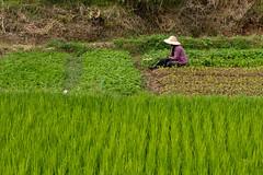 20161013-IMG_1853 (Konrad K. M.) Tags: myanmar kalaw shan