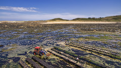 Mini Oyster Farming (Ningaloo.) Tags: aerial herm oyster farming shellfish beds low tide tilt shift miniature tractor
