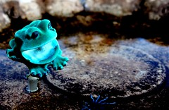 Frog in a Birdbath (Noel C. Hankamer) Tags: birdbath cute reflection shallow amphibian animal background beautiful blue colorful curiosity eye frog garden green hyla little water artificial