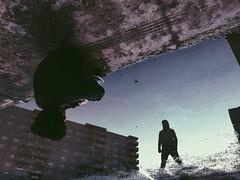 ...   #reflection #upside_down #water #Iran #tehran #vscocam #vsco (amirsaviz) Tags: reflection upsidedown water iran tehran vscocam vsco