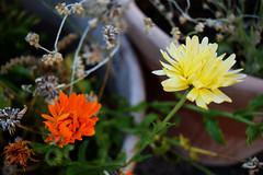 Flowers Yellow and Orange