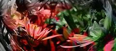 IMG_6660 Spring flowers (Rodolfo Frino) Tags: flora planta flor flores spring primavera bright color colors colour colours colorful colourful colorido natur natura nature naturaleza wow gazania gazanias natural natureza digital