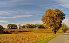 y'a une route (jean-marc losey) Tags: france occitanie tarn randonne gaillac arbre route automne autumn tree d700