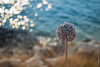 Solitario (Guglielmo D'Arezzo) Tags: sea mare vieste gargano porticello