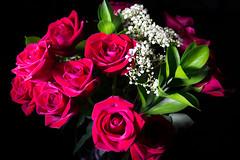 IMGP4443.jpg (PenTex) Tags: birthday red plant lightpainting flower love blackbackground leaf stem decoration dramatic romance petal flirting dating backgrounds bouquet sensuality valentinesday redroses vibrantcolor roseflower bedofroses studioart