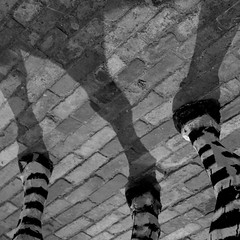 238. zebrabeine (joe.laut) Tags: bw art square blackwhite august sw schwarzweiss 2015 incoloro nordart joelaut 3652015