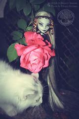 ... (Elvaira Devians) Tags: cat doll dolls ooak cam raquel custom clemente ooakdolls createamonster monsterhigh monsterhighdolls monsterhighooak elvairadevians raquelclemente