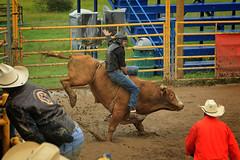 CalgaryPoliceRodeo2015-BullRiding-508 (calgarypolicerodeophotos) Tags: horse calgary race bareback sheep barrel police bull racing poker rodeo calf bullriding chute mutton saddle bronc steerwrestling barrelracing saddlebronc cpra chutedogging