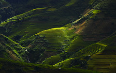 Heaven (SaravutWhanset) Tags: china travel light sunset summer sun sunlight holiday plant green eye field yellow river landscape asian thailand photography gold book photo asia view rice terrace air culture vietnam blackground airline beatiful mountian rimlight terracerice jouner spilitasia